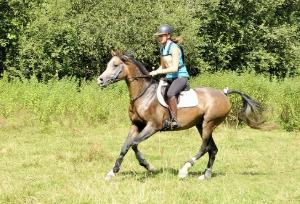 Jeunes chevaux à Soumensac